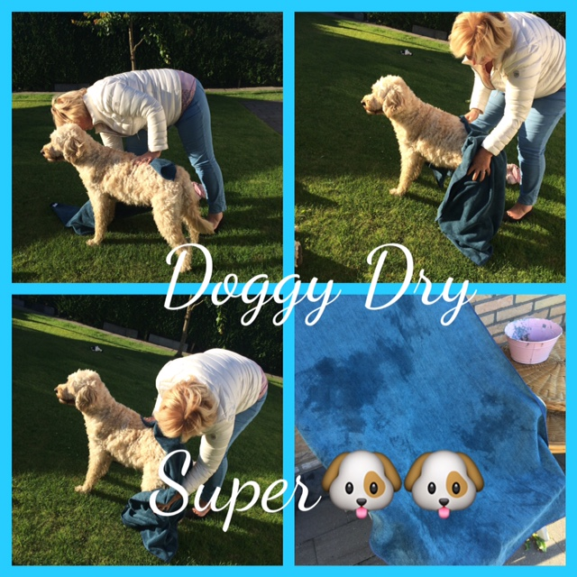 Doggy Dry.JPG